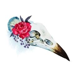 Watercolor bird skull vector image vector image