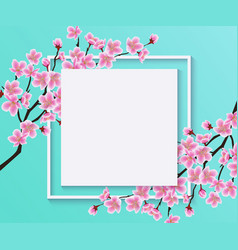 blossom sakura or cherry flowers on blank frame vector image