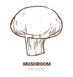 Champignon mushroom hand drawn vector