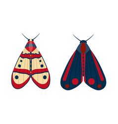 colorful tropical butterfly moth icons in cartoon vector image