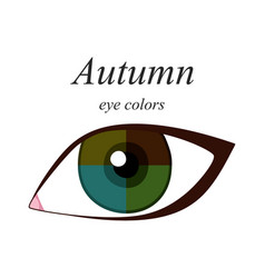 Eye colors for autumn type vector