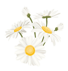 Isolated daisy chamomile flower collection set vector