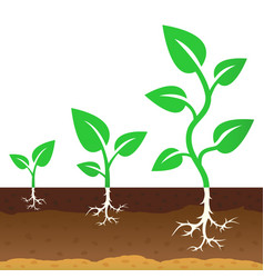 stage growth a sprouts vector image