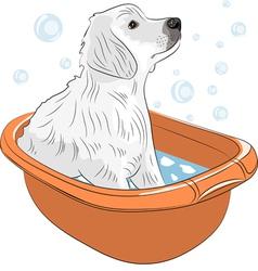 Labrador a vector