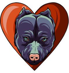pitbull head dog in heart vector image