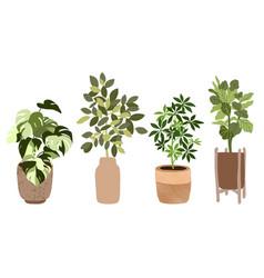 set four tropical houseplants in pots vector image