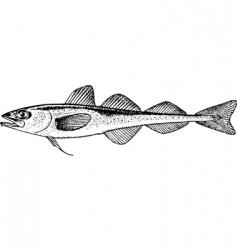 fish boreogadus saida vector image vector image
