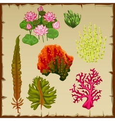 Algae and corals decoration of the seabed vector