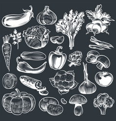 chalk drawing vegetables various vintage hand vector image