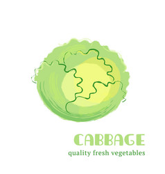 fresh cabbage isolated on white background vector image