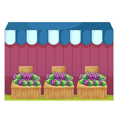 Fruit stands with grapes vector image