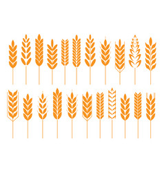 Grain cereal icon shape vector