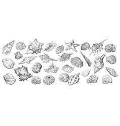 hand drawing seashells set long vector image