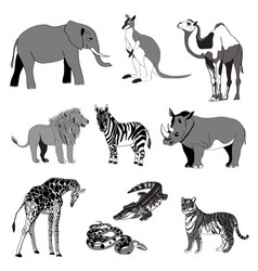 The image of animals animals vector