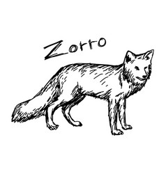 Zorro standing - sketch hand drawn vector
