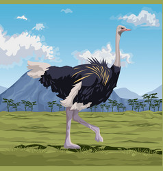 Colorful scene african landscape with ostrich vector