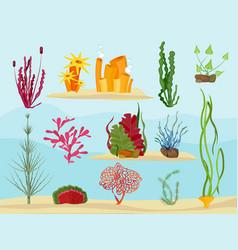seaweed underwater wildlife marine botanical vector image