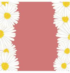 White aster daisy flower border vector