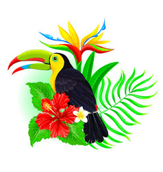 toucan with palm leaf and hibiscus vector image vector image