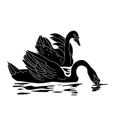 black swans vector image