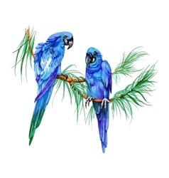 Blue parrots on a branch felt pen hand drawn vector