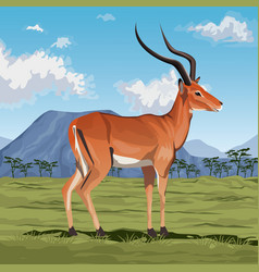 colorful scene african landscape with gazelle vector image