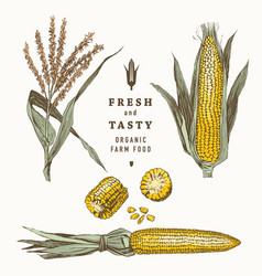Corn on cob vintage design set vector