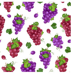 grape bunch seamless pattern on white background vector image