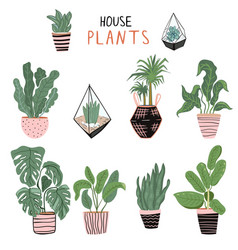 set different house plants vector image