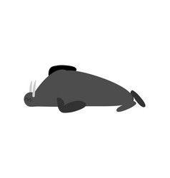 Sleeping walrus seal arctic animal sleeps sleepy vector