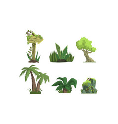 Tropical jungle trees and plants set user vector