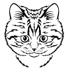 Cat kitten vector