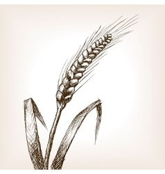 Wheat ear sketch style vector image vector image