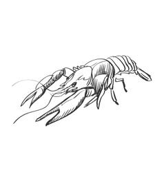 doodle lobster vector image