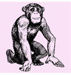 Monkey or chimpanzee vector