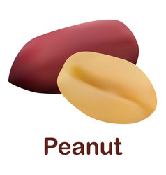 Peanut icon realistic style vector
