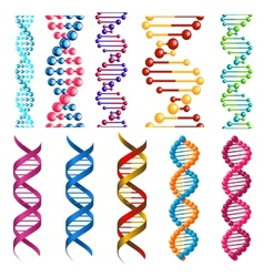 Colorful DNA molecules and cells vector image