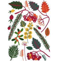 colorful leaves and berries autumn floral vector image