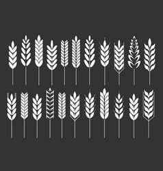 Grain cereal icon shape black background vector