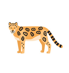 leopard isolated on white background gorgeous vector image