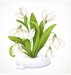 spring flowers snowdrops on green stems are vector image