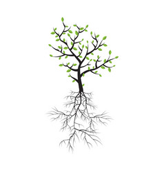 spring tree with roots and foliage vector image