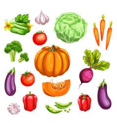 vegetable watercolor set of fresh organic veggies vector image vector image