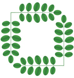 Acacia twigs - square vector