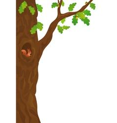 Squirrel in oak vector