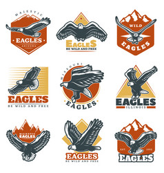 colored vintage beautiful eagles labels set vector image vector image