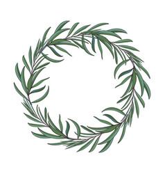 beautiful elegant hand drawn melaleuca twig vector image