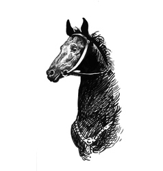 black ink hand drawn horse vector image