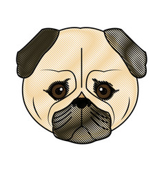 Cute face dog pug pet aminal image vector