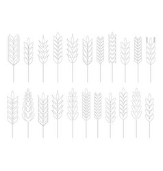 Grain cereal icon shape black outline vector